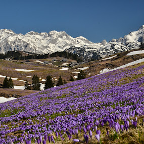 Velika planina 2 by Bojan Kolman - Landscapes Prairies, Meadows & Fields (  )