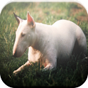 Bull Terrier Game icon