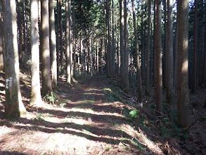 広い林道に