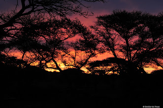 Photo: Sunset, Mokala National Park, South Africa