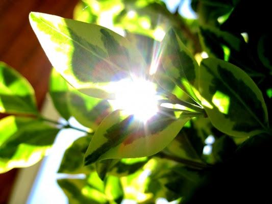 Un raggio di luce tra le foglie di l_aura