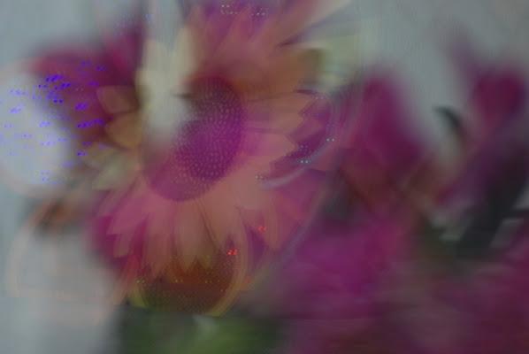 Acquerello di Orchide di luiker