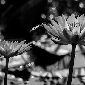 by Dilip Ghosh - Black & White Flowers & Plants