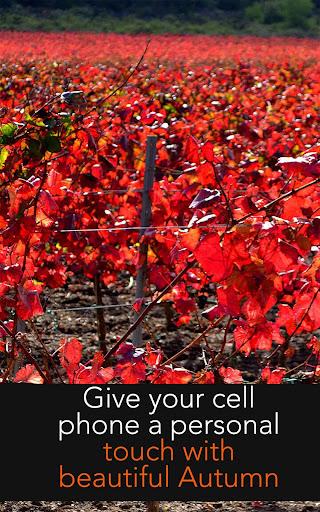 玩免費娛樂APP|下載Autumn Wallpapers app不用錢|硬是要APP