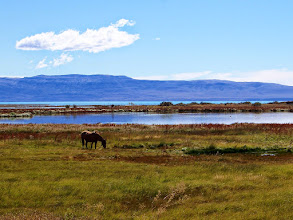 Photo: We hiked around El Calafate's Laguna Nimez, a wetlands preserve on the edge of town