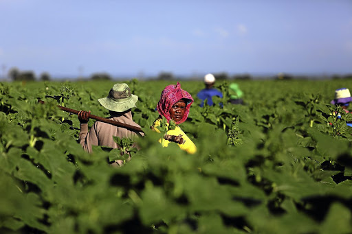 Land plan:  SA is much closer to its target of transferring at least 30% of agricultural land from white to black ownership. Picture: FILE PICTURE