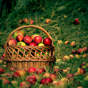 jablíčka by Jarka Hk - Nature Up Close Other Natural Objects ( beauty, nature, playing, decoration, apples, fotografia )