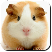 Hamster Wallpapers