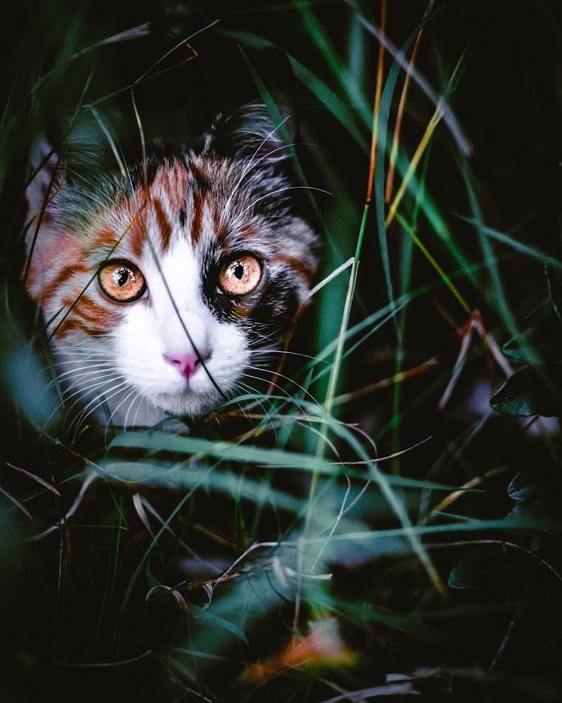 La tigre del giardino di GiorgioDubini