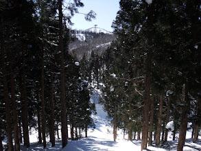 下に林道が見えて(切り開きを降りる)