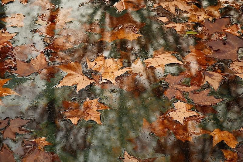 foglie di silvia_brutti