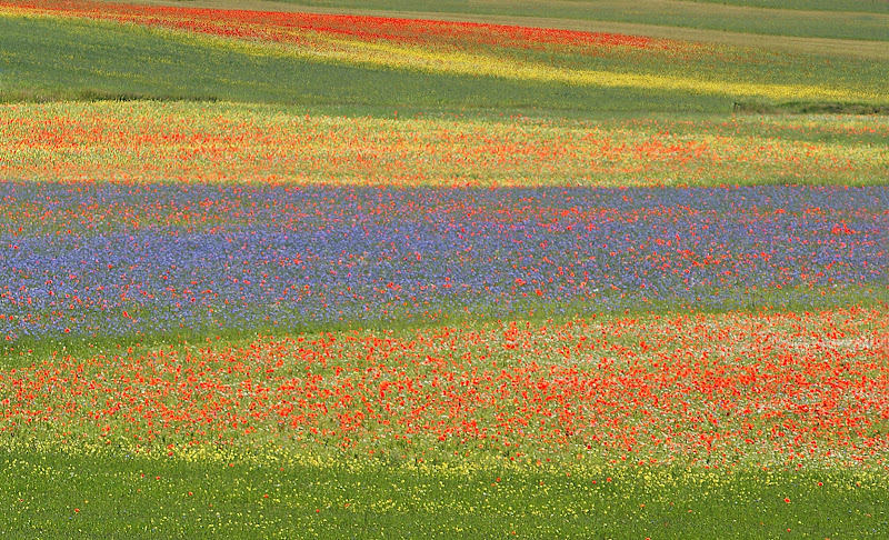I colori dell'arcobaleno di mariarosa-bc