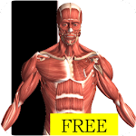 Visual Anatomy Free icon