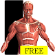 Visual Anatomy Free apk