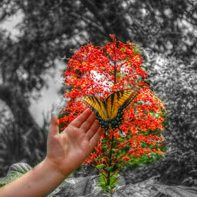 Flower and Butterfly by Toni Haas - Flowers Flower Gardens ( orange, butterfly, pagoda, colorful, flower,  )