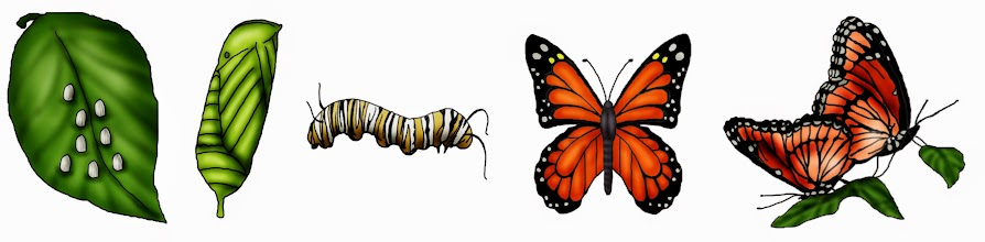 Photo: Illustration showing the life cycle of a monarch butterfly