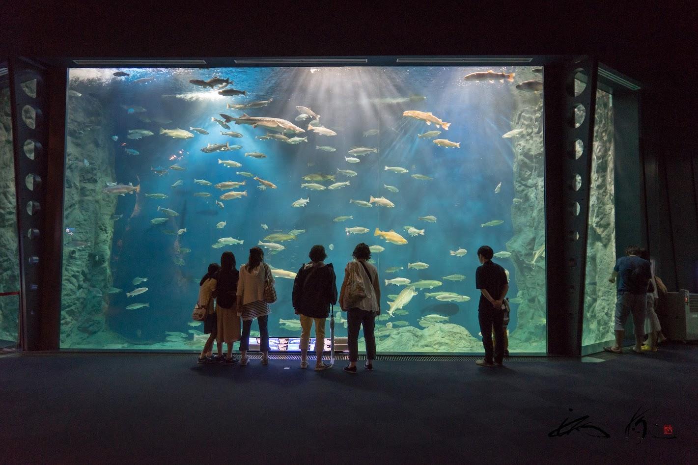 高さ5m幅12mの巨大水槽