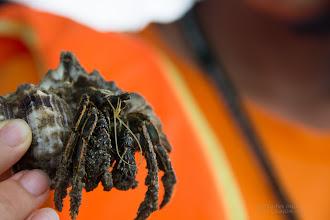 Photo: The survival of hermit crabs is one of the several reasons why it is important not to remove shells from the ocean and from the shore.  Hermit crabs use empty shells of sea snails (or sometimes bivalves and scaphopods) to protect its vulnerable abdomen from predators. As the hermit crab grows in size, it must find a larger shell and abandon the previous one.  http://en.wikipedia.org/wiki/Hermit_crab  นี่เป็นเจ้าปูเสฉวนที่ติดมาบนเรือที่เราล่องดูปากแม่น้ำปราณ เป็นตัวอย่างที่แสดงให้เห็นว่า แม้เปลือกหอยที่ว่างเปล่าก็มีประโยชน์เพราะมันเป็นบ้านของปูชนิดนี้ เป็นที่หลับภัยจากนักล่าต่างๆ เมื่อปูโตขึ้นเราก็จะย้ายไปหาเปลือกหอยที่มีขนาดใหญ่ขึ้น ธรรมชาติสร้างสรรค์ไว้ให้มีความสมดุลอยู่แล้ว