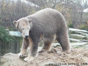 Photo: Knut hat kraeftig Farbe aufgelegt ;-)