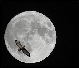 Photo: 27. december 2012 - Månen