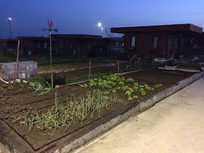Photo: 1 Mayıs itibariyle bahçem...