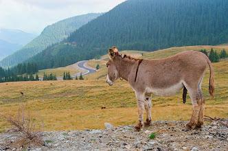 Photo: Kicsi szamár a hegyen, lóg a...