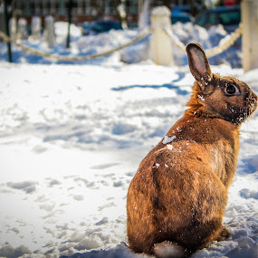 Euclid  by Ravi Patel - Animals Other Mammals ( rabbit, winter, bunny, cold, snow )