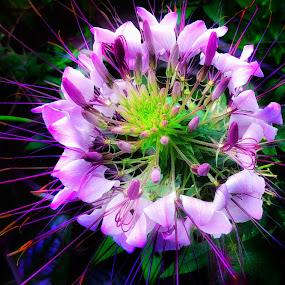 Beauty in the garden by Morris Fremar - Flowers Flower Gardens