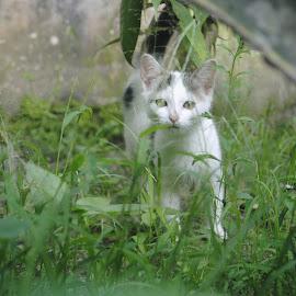 Kim  by Anisha Rahmawati - Animals - Cats Kittens (  )