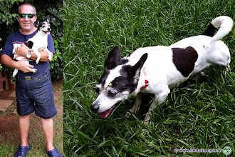 Photo: Esta é a Japinha. Eu a adotei em 2007: estava magérrima e vivia com dezenas de outros cachorros em péssimas condições. Não sei qual a sua idade, mas ela já apresenta alguns sinais de velhice. Mesmo assim, é muito ativa e brinca bastante!