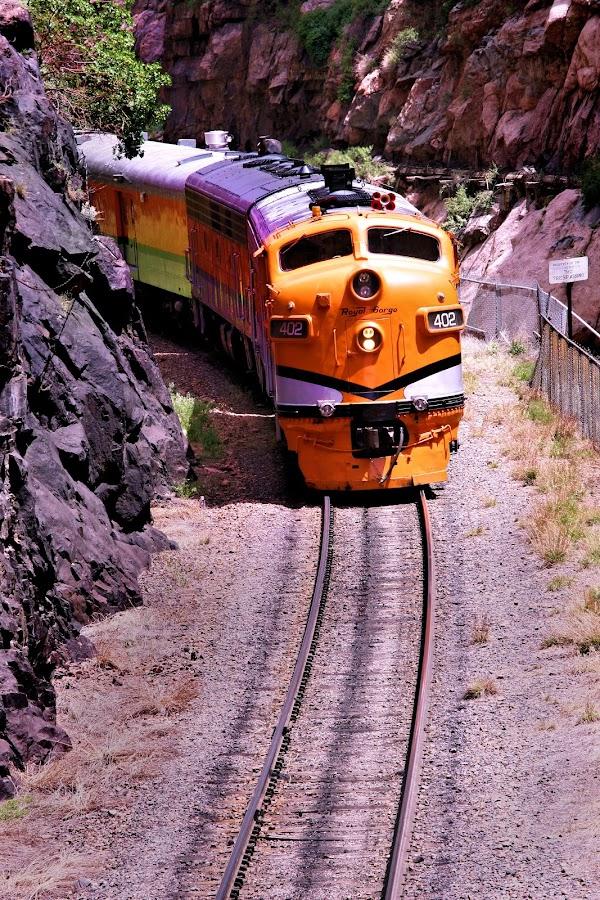 train by Kristy Shamburg - Transportation Trains ( colorado, train, yellow,  )