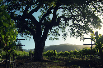 Photo: Mornings at Kenwood Vineyards