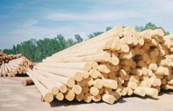 wooden-piles