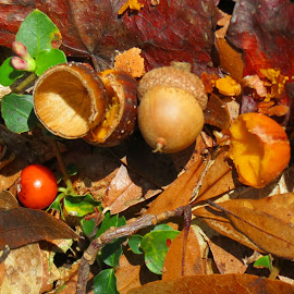 Woodland Lunch by Rita Goebert - Nature Up Close Other Natural Objects ( acorn; partridge berry; oak leaves; florida;,  )