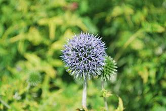 Photo: Another garden close-up