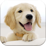 Dog Pairs - Memory Match Game Icon