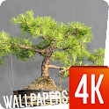 Bonsai Wallpapers 4K icon