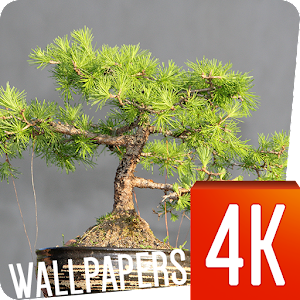 Bonsai Wallpapers 4K.apk 1.0.10
