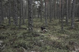 Photo: Kahn runderer