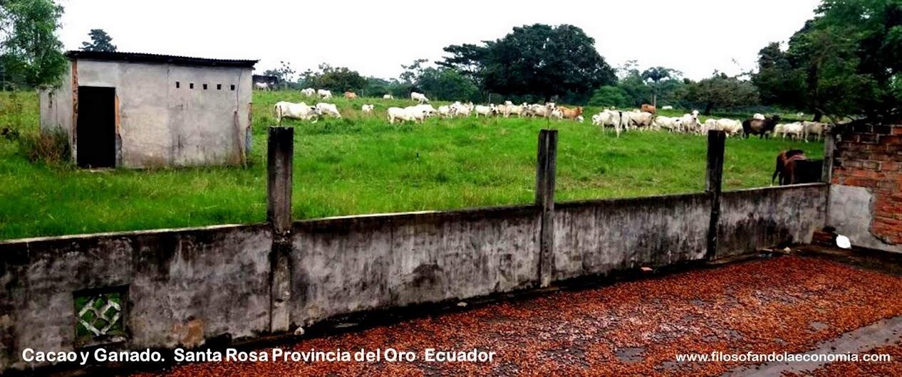Supervivencia-Intelectual-Filosofando-la-Economia-Ecuador