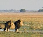 Safari Tour And Lunch : Rustenburg, South Africa