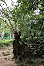 Photo: Year 2 Day 44 -   Tree  in the Archaeological Park #2