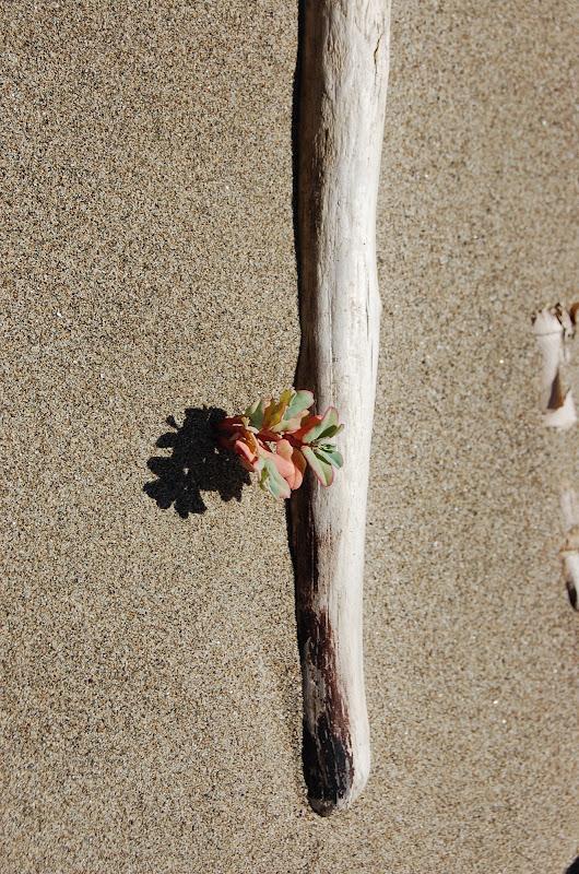 """sabbia fertile"" di lanolfi"