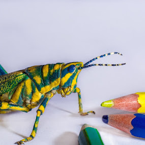 Inside the Body Paint Shop by Furrukh Shahzad - Animals Insects & Spiders ( pencil, macro, nature, fauna, blue, color, green, yellow, insect, grasshopper )