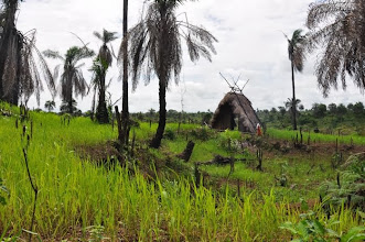 Photo: Traditional slash-and-burn upland rice field in Tormabum, Bo District, SW Sierra Leone. [Photo by Erika Styger, July 2012]