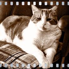 Photo: Cat portrait - Sepia #intercer - via Instagram, http://instagr.am/p/KQlF0YJfjL/