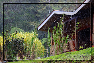 Photo: NF Photo 110131 at Heliconias Lodge, Costa Rica  http://nfbild2.blogspot.com/2011/03/ww-regnigt-varre-hard-rain.html
