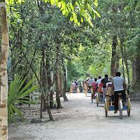 Into the jungle di