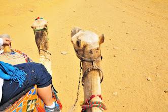 Photo: My camel's head