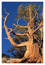 Photo: Eastern Sierras-20120715-281